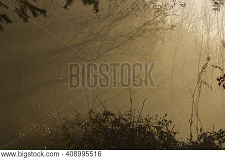 Bare Tree Branches In Mist. Wintertime. Box Hill, Dorking, Surrey, England