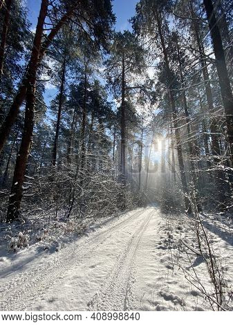 Photography On Theme Winter Snow Forest, Beautiful Bright Sunset. Photo Consisting Of Sunset Winter