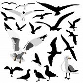 Seagull Group is original artwork. The vector file is in AI-EPS8 format. poster