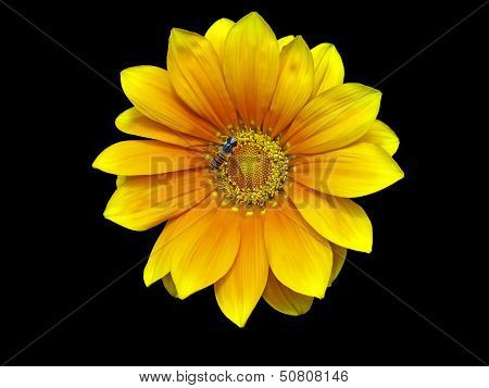 Vibrant Yellow Daisy