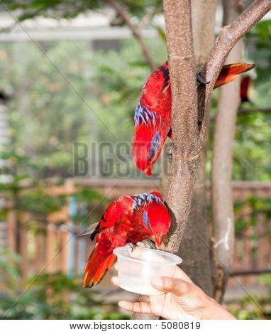 children hand feeding colorful parrot standing on tree branch poster