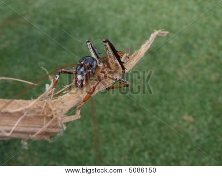 Weta On A Stick