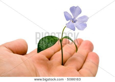 Flower Is In A Left Arm