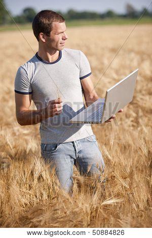 Agronomist analysing wheat market using laptop