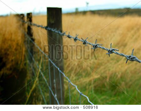 Barbed Wire, Against A Rich Field