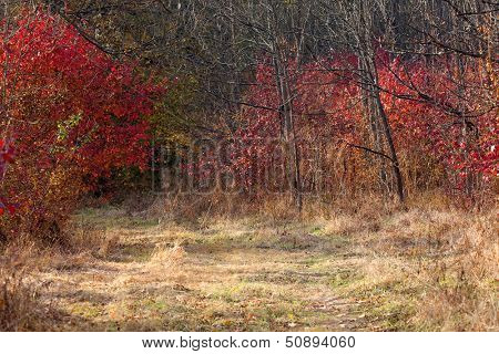 Autumn forest landscape