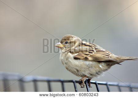 Bird - Finch