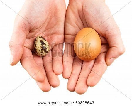 Quail Eggs And Hand. Photos Isolated On White Background
