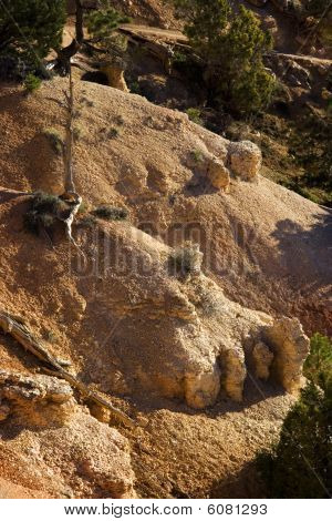 Bryce Canyon-Erosion