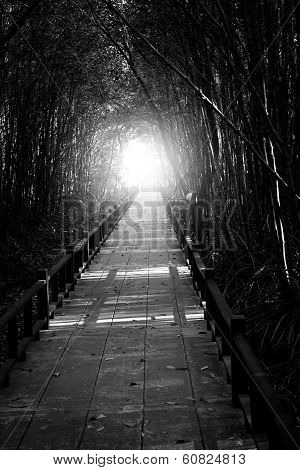 Walkway For Nature Study In Mangrove