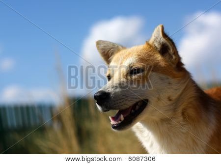 Dog's face outdoors