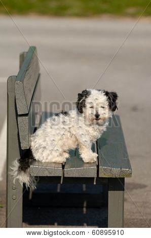 A sweet dog is resting on a bench