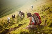 Hiker is waching horses in Carpathian mountains poster