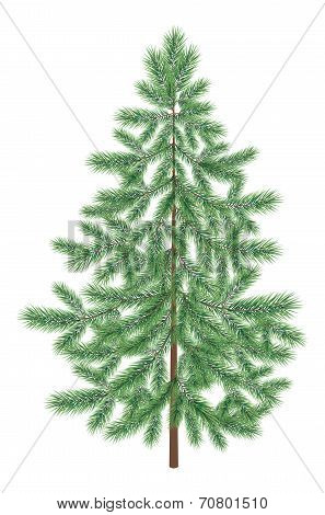 Christmas green spruce fir tree isolated