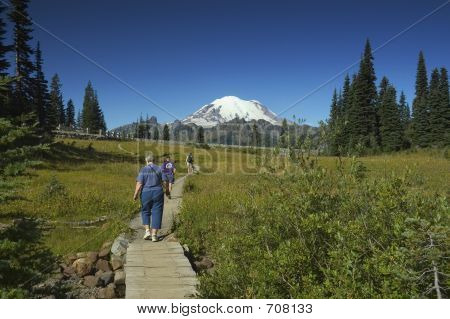 Meadow Trails