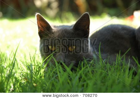 poster of cat on the grass