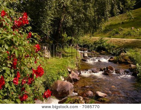 Mountain river with red flowers and green grass