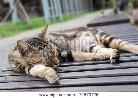 Tabby cat lying on a chair to sleep in the cat village of Houtong, Taiwan.
