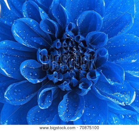 Beautiful blue flower close-up