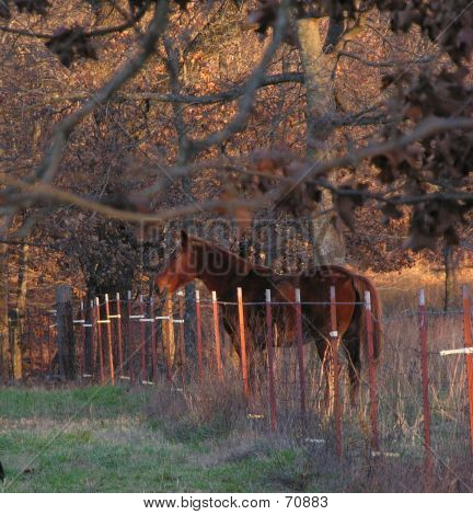 Fence By Horse