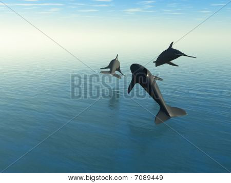 Three Dolphins Above The Sea