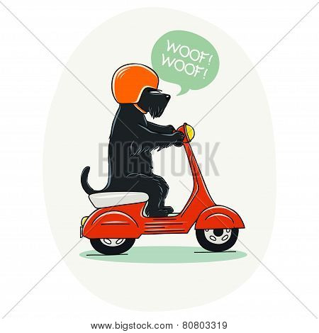 Dog On Scooter.