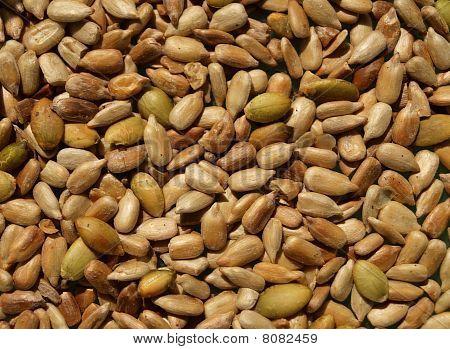 Closeup of roasted sunflower seeds