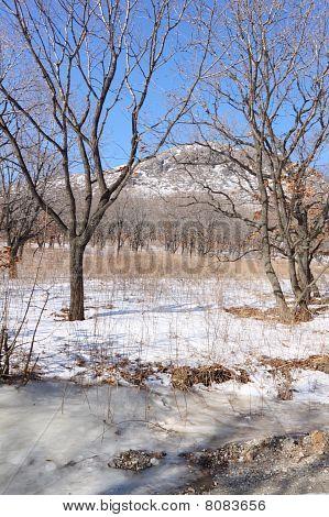 Mountain. Wood. Winter