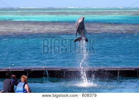 dolphin jumping at order