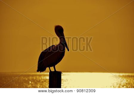 Pelican on a post silhouette