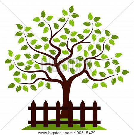 Tree Behind Fence