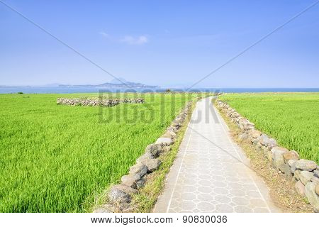 Landscape Of Green Barley Field And Horizon