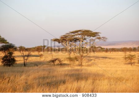 Early Morning Serengeti