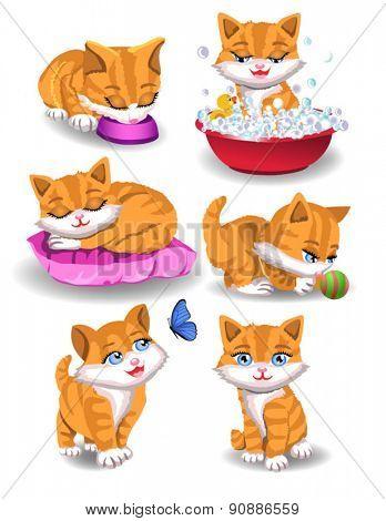 cat doing different activities