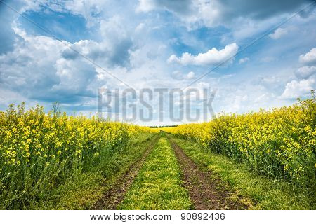 Ground road in yellow rapeseed field. Summer landscape