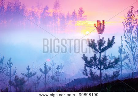 Beautiful Nature Sunrise Foggy Landscape. Misty Forest. Spring Nature. Park with Trees. Tranquil Background