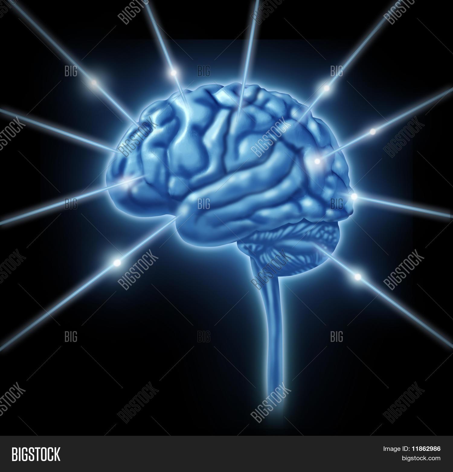 Hersenen Afbeelding En Foto Gratis Proefversie Bigstock