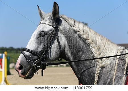 Side View Portrait Of Grey Horse With Nice Braided Mane Against Blue Sky