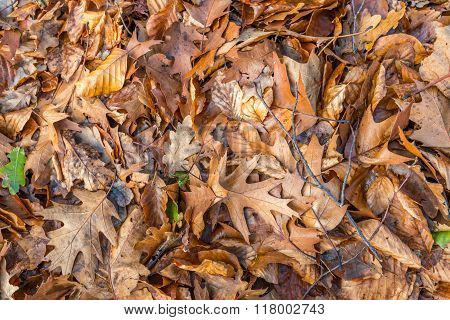 Fallen Leaves On The Bottom Of A Forest