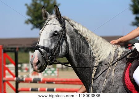 Braiding Provides An Aesthetically Appealing Look For A Jumping Horse
