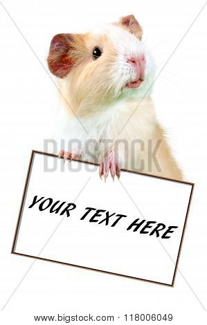 Guinea pig holding white cardboard  - put your own text here