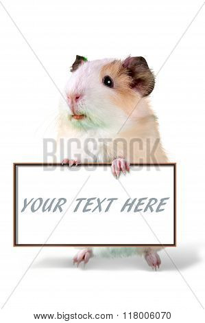 Guinea pig holding cardboard  - put your own text here