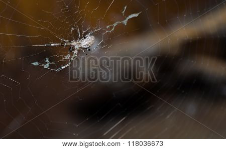 Spider On The Cobweb.