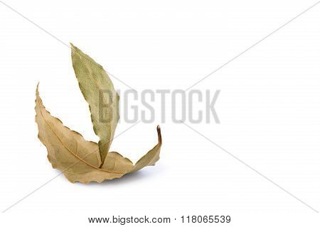Sailing Ship Made From Two Laurel Leaves On A White Background