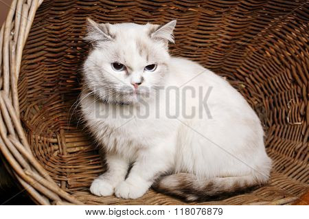 White Cat sitaing  in the basket