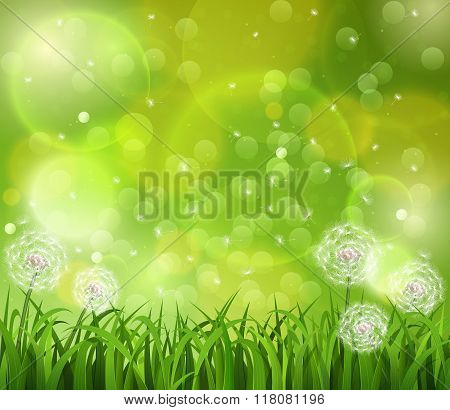 Dandelion In The Grass On A Green Background.