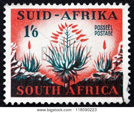 Postage Stamp South Africa 1953 Aloes