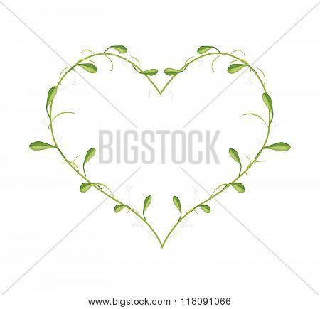 Lovely Green Mistletoe In A Heart Shape