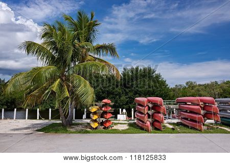 Canoes And Palm