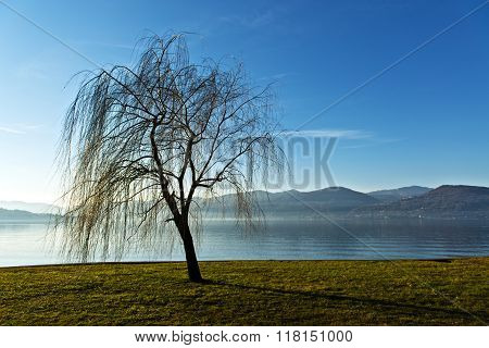 Solitary Tree Near The Lake